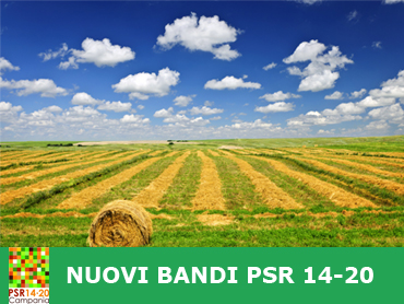bandi_psr_home