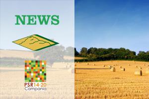 PSR Campania 2014/2020 - Misura 2 - Sottomisura 2.1 - Rilevamento dei fabbisogni - Servizio di consulenza aziendale