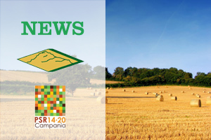 PSR COMUNICA – NEWSLETTER N. 4 DEL 28/01/2021